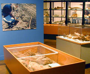 Fossils on exhibit