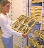 Checking out an entomology butterfly collection