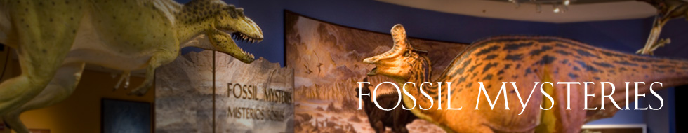 Fossil Mysteries Exhibition