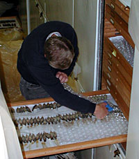 Packing the bird collection for moving to the new wing of the museum