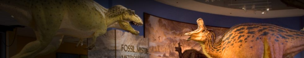Fossil Mysteries