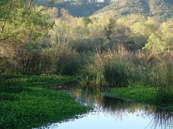 San Diego River, Photo by Michael Field, SDNHM