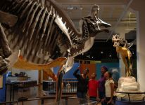 Visitors enjoying Fossil Mysteries exhibit