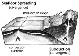 drawing demonstrating both seafloor spreading (divergence) and  subduction (convergence)